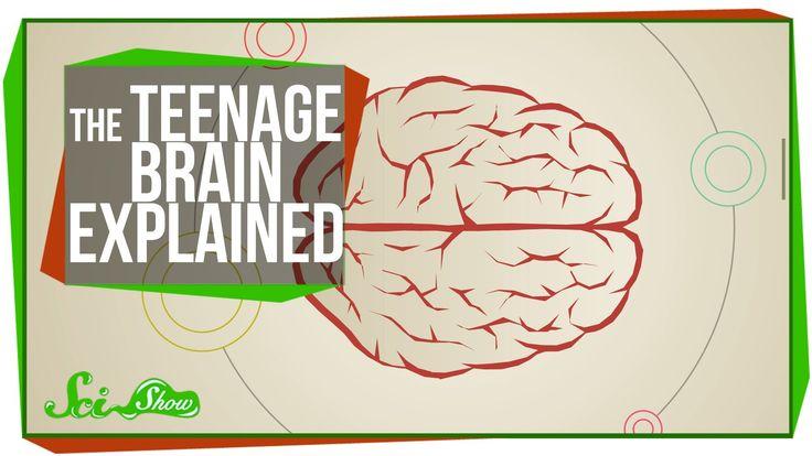 SciShow Explains the Teenage Brain -- Hank Green