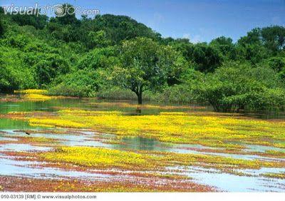 Cultura Guaraní: Biomas del pantanal