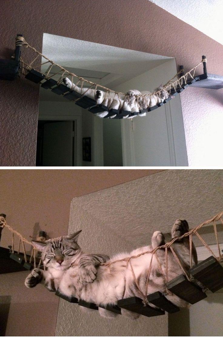 Awesome Cat Furniture Design Ideas For Crazy Cat People. Indiana Jones Cat Bridge