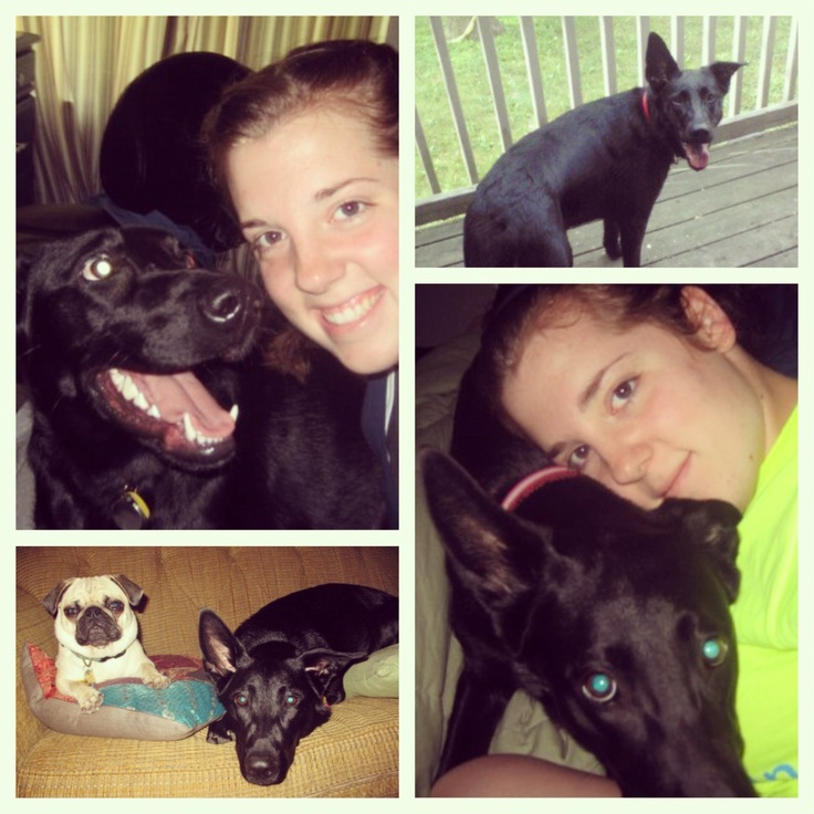 Rest in peace Izzy girl.. I'm sorry you had to suffer and pay the price for the mistakes of others.. You are loved greatly and will not be forgotten. Please share her story. Help Izzy's voice. I pray this will not happen to anyone else's beloved furry family member.   http://wap.myfoxdetroit.com/w/main/story/71699803/