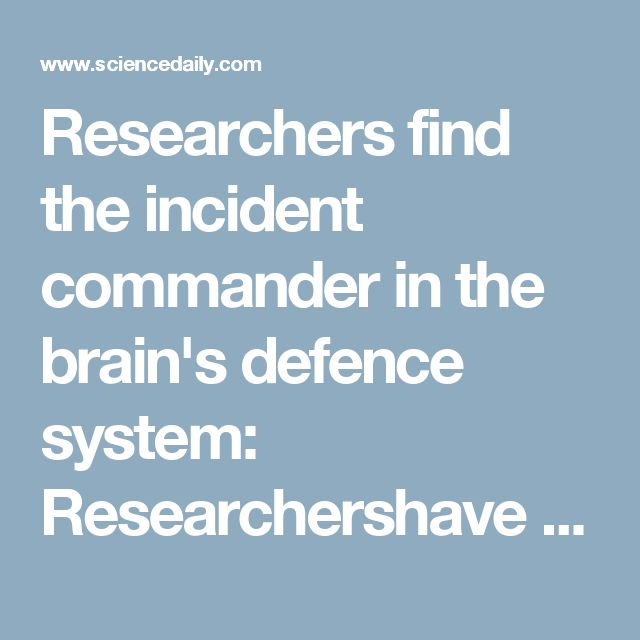 Researchers find the incident commander in the brain's defence system: Researchershave come closer to answering the question of how the brain defends itself against viral infections -- ScienceDaily