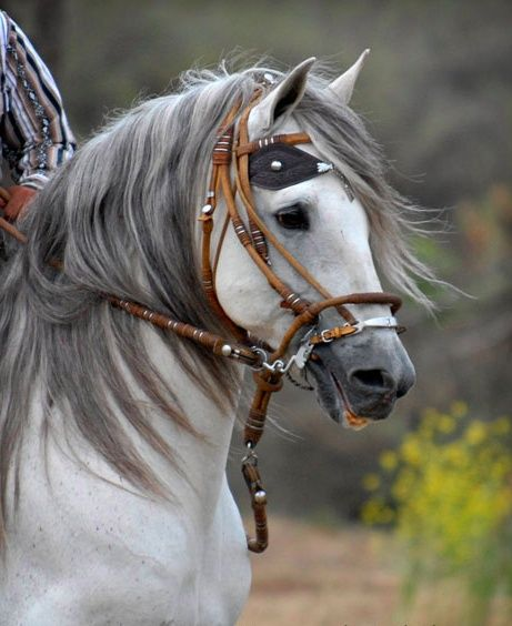 17 Best images about ♥Horses♥ on Pinterest | Beautiful ... - photo#43