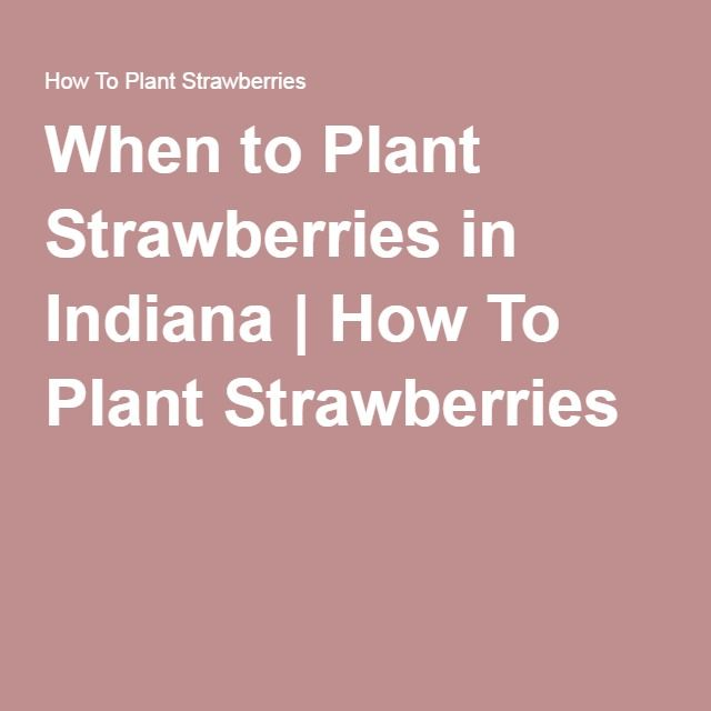 When to Plant Strawberries in Indiana | How To Plant Strawberries