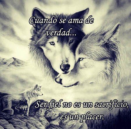 Идей на тему «Imagenes De Lobos Enamorados в Pinterest»: 17 лучших ...