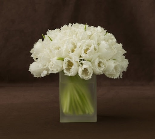 bouquet of these for USC: Wedding Ideas, Fringed Tulips, White, Wedding Flowers, Flower Arrangements, Single Flowers, Centerpieces, Floral