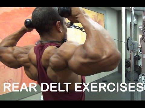 Rear Delt Exercises-3 Killer Exercises - YouTube