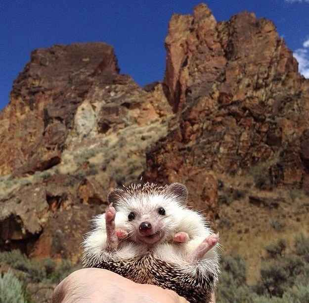 Best Adorable Stuff Images On Pinterest Insects Beautiful - This instagram account will satisfy your addiction for adorable hedgehogs