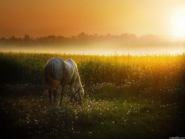 Лошадь, конь, животное, утро, туман, трава, солнце обои, картинки, фото