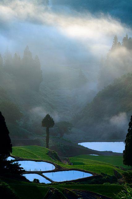 Morning Rice field, Japan.