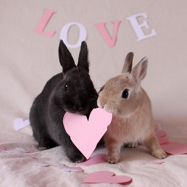 through rose tinted glasses - bunny love
