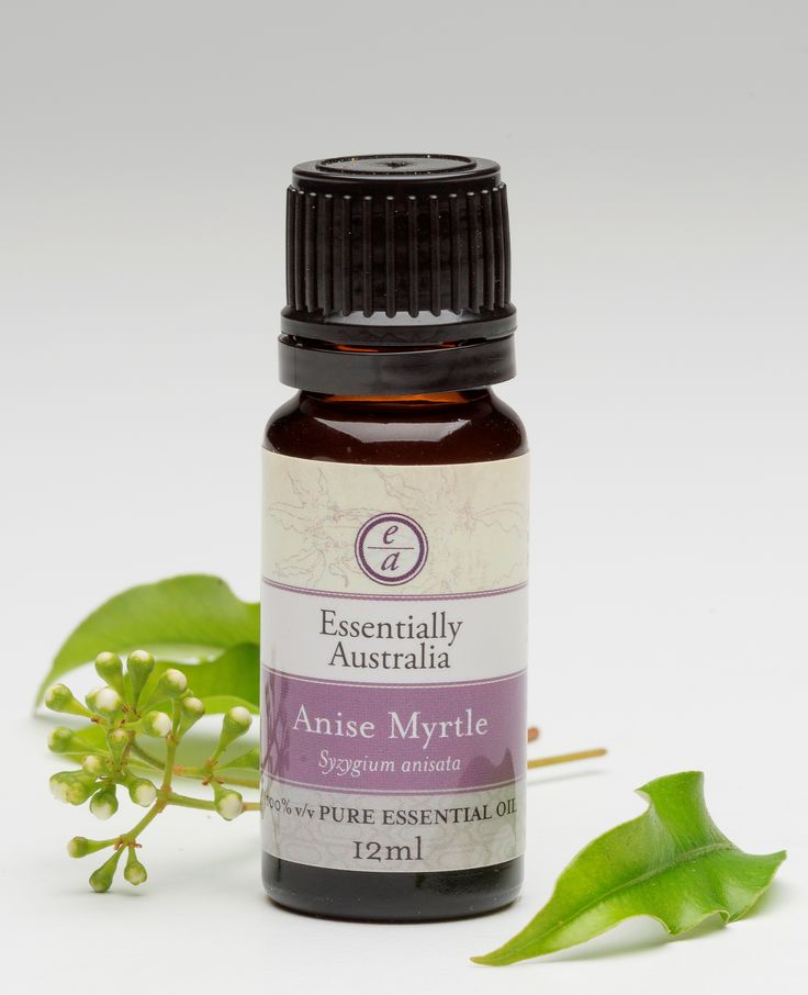 Anise Myrtle (Syzygium anisatum (formerly Backhousia anisata & Anethola anisata)) The best aniseed essential oil of them all, fresh, strong, yet calming, one of our favourites. A rare rainforest tree, grown in plantations near Byron Bay.