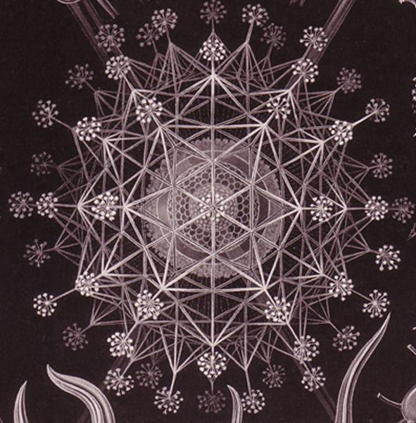 Ernst Haeckel / Sacred Geometry <3
