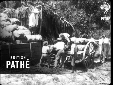 British Guiana - The Country And Its Industries Reel 5 (1924)