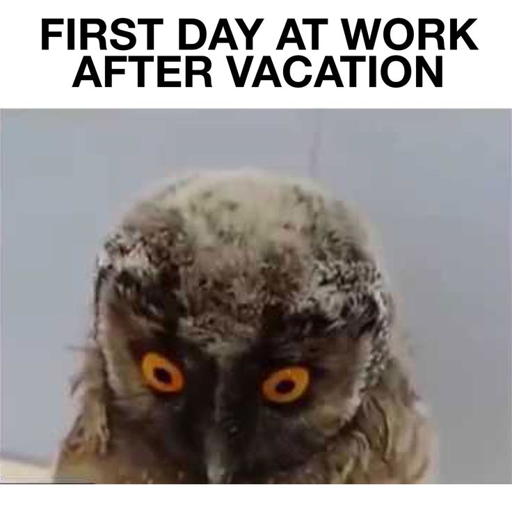 First Day At Work After Vacation Funny Owl Movie