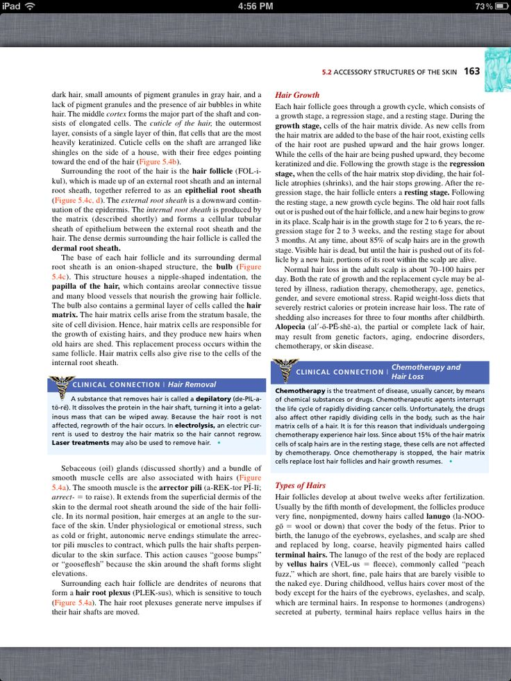Exam chapter 15 anatomy and physiology College paper Service ...