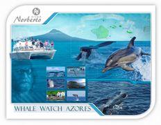Whalewatching nos azores. Observação de Baleias e Golfinhos