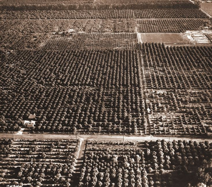 "Before it became Cal State Fullerton, the site once was Native American land, and then citrus ranches. ""The Fullerton Way: Fifty Years at California State University, Fullerton, is a book with something for just about everyone with a fascination about how a group of orange groves evolved into a major university."