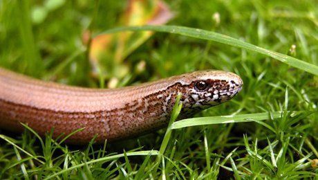 Eloigner les serpents de son jardin