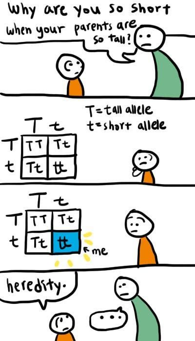 genetics lesson | Genetics | Science jokes, Biology jokes ...