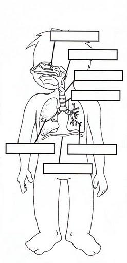 Respiratory System Worksheets | RESPIRATORY, DIGESTIVE & CIRCULATORY BODY SYSTEMS | learningenglish ...
