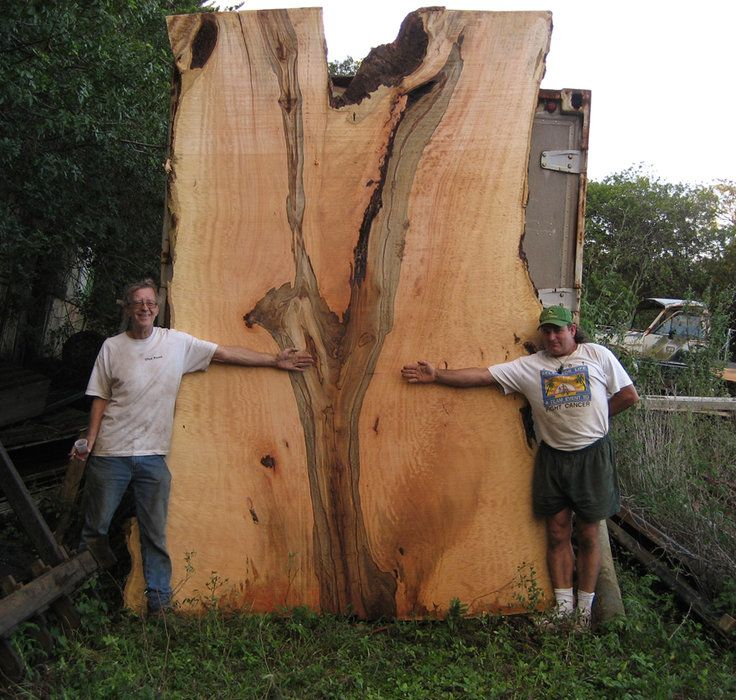 Best Images About Wood Identification Pinterest Sweet Gum Logs And Grains