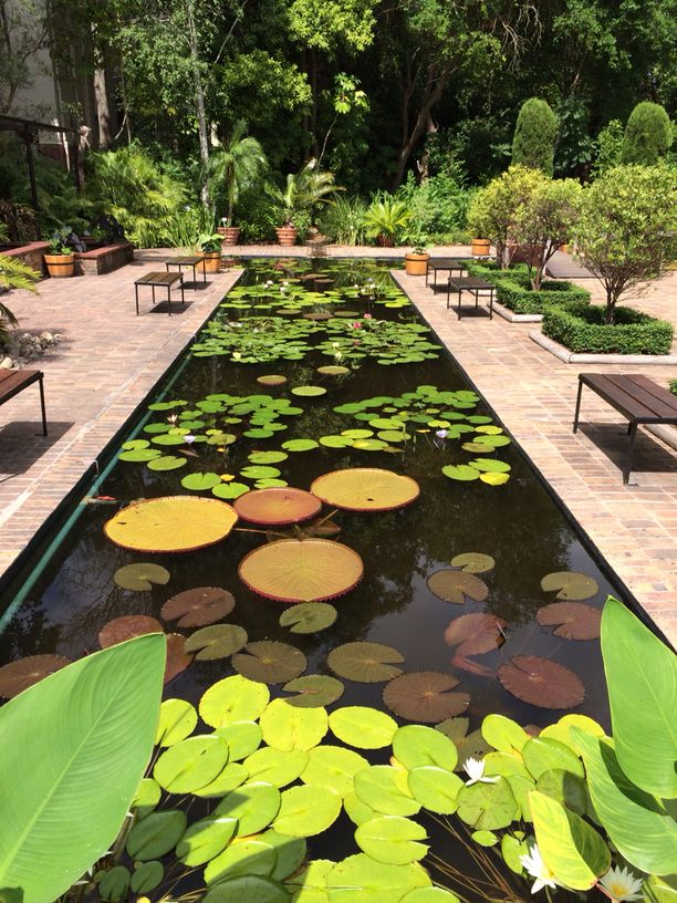 Stellenbosch University Botanical Garden, Stellenbosch, South Africa — by Raffler. The beautiful lily pond in Stellenbosch.