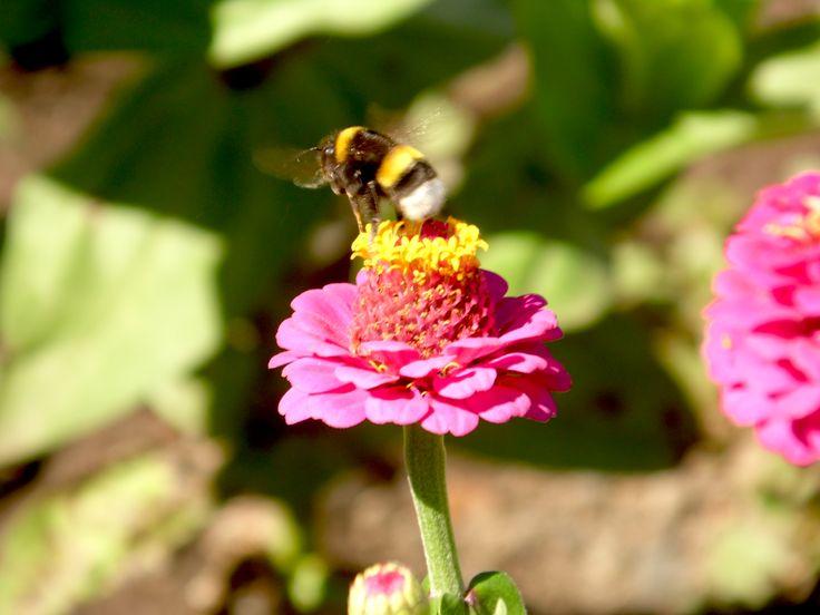 #Abejatrabajando #Flor #Naturalezapura