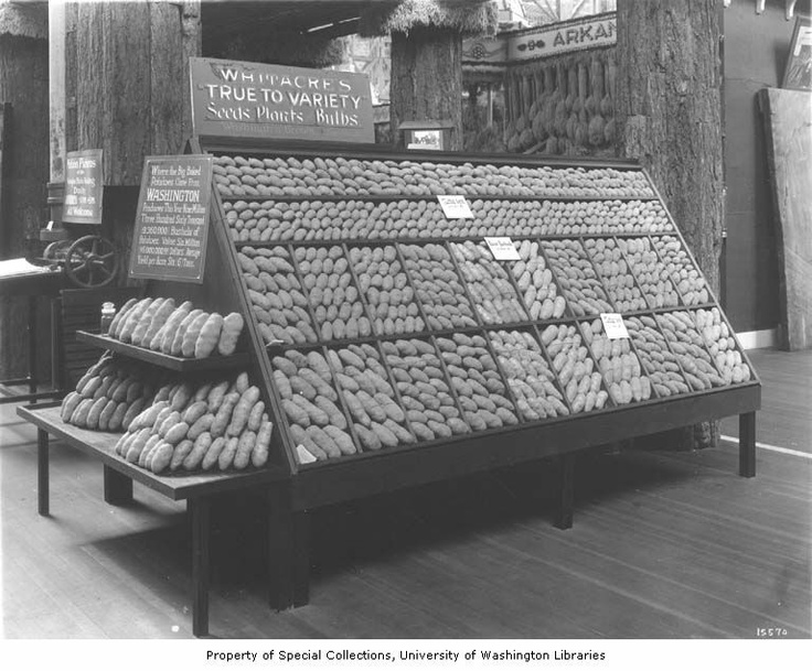 Display of Washington potatoes in the Palace of Agriculture, Panama Pacific International Exposition, San Francisco, 1915