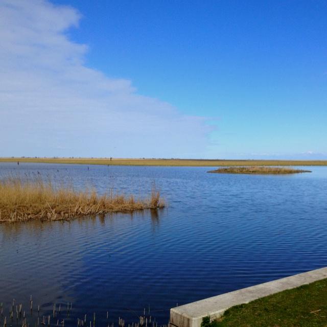 Oostvaardersplassen Flevoland