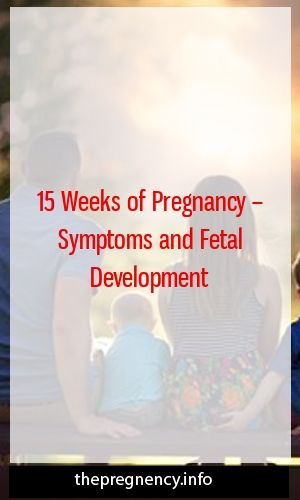 15 Weeks of Pregnancy – Symptoms and Fetal Development  – Pregnancy Health