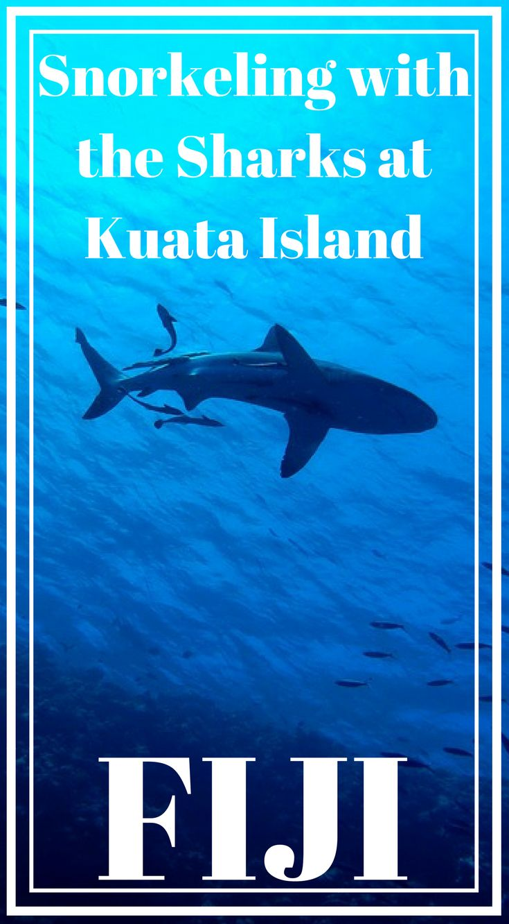 Snorkeling with the sharks at Kuata Island, Fiji. A must-experience attraction for adrenaline junkies, the Kuata Island Day Tour is unlike anything that you may have ever seen before. Every bit of this tour is packed with thrill, adventure, and awe-inspiring moments. Click to read 11 Epic Day Trips from Denarau, Fiji #AdventureTravel #Fiji #Denarau #Travel