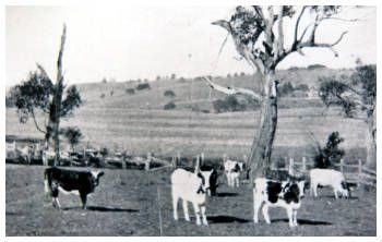 Cleveland in the 1920s - still a dairy farm.