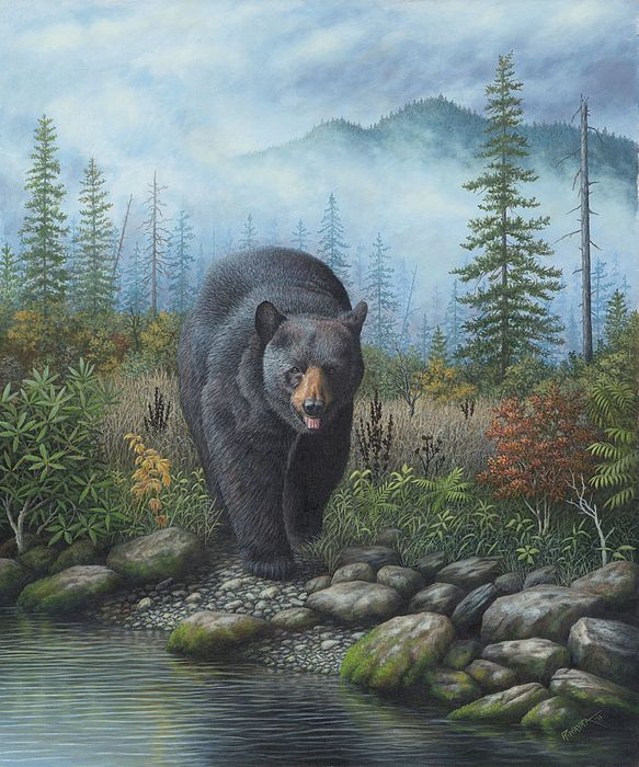 339 Best Images About Bear Paintings Photos On Pinterest