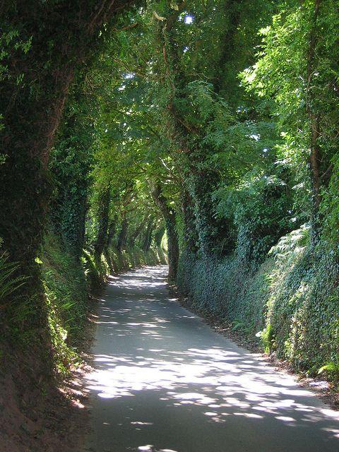 Green lane in Jersey, Channel Islands by Janet W1, via Flickr