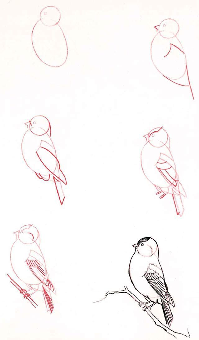 Learn to draw: Bird