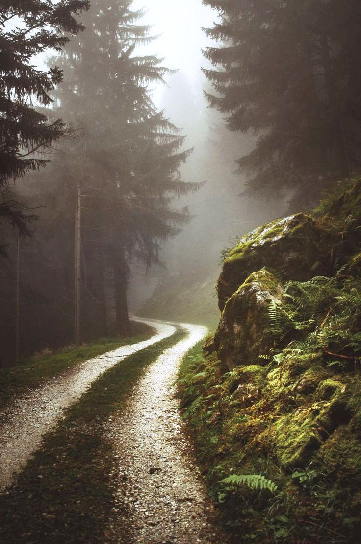 20 ideas for forest photography for your inspiration