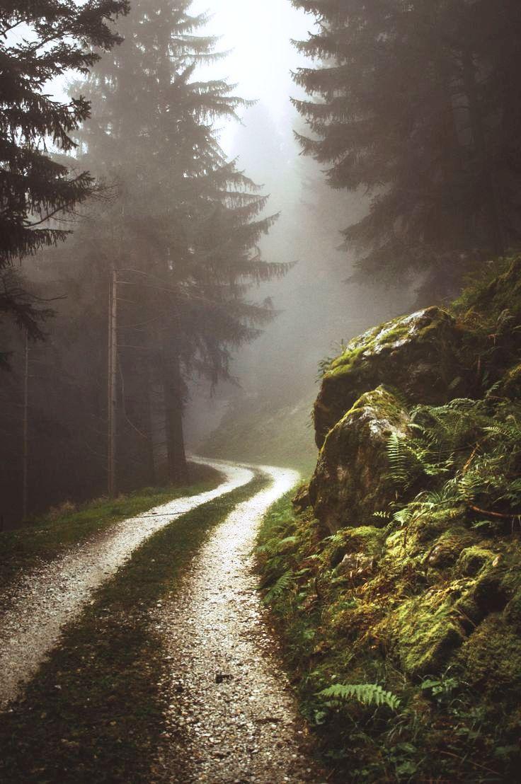 20 Ideen für die Waldfotografie für Ihre Inspiration