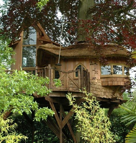 Tree House: Cool Trees Houses, Dreams Houses, Favorite Places, Blue Forests, Amazing Trees, Santa Monica, Treehouse, Cottages, Bays Window