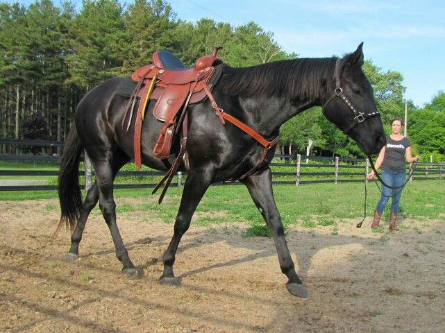 25+ best ideas about Barrel Horses For Sale on Pinterest ...