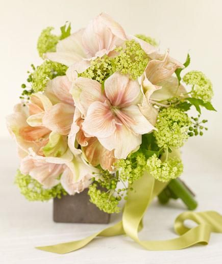 Pink Amaryllis | Find out the price per stem of popular wedding flowers.