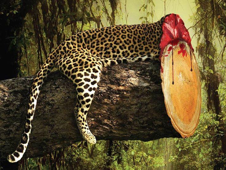 Campagne choc et très visuelle contre la déforestation et ses méfaits, à commencer par les conséquences désastreuses sur les animaux, imaginée par Ganesh Prasad Acharya pour la fondation de défense de la vie sauvage Sanctuary Asia