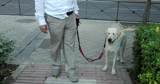 5 errores comunes cuando sacamos a pasear al perro