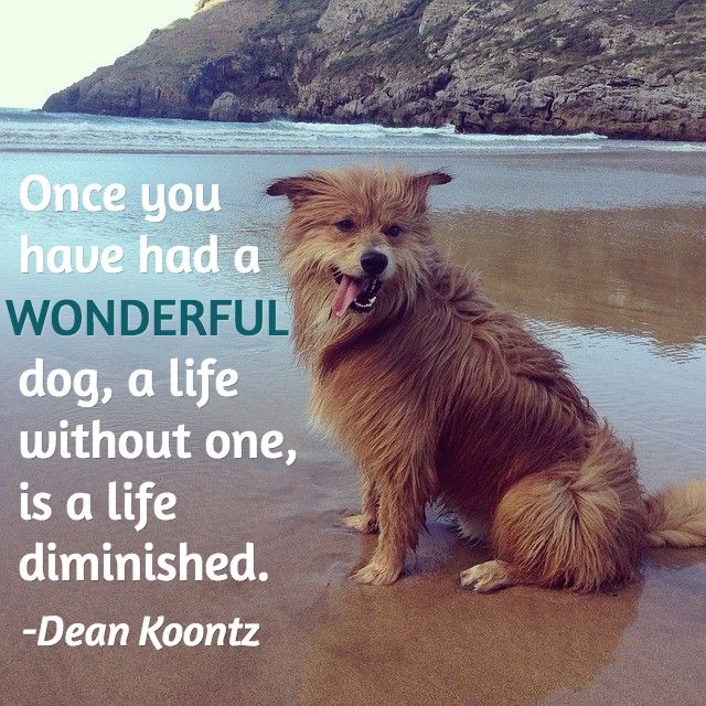 quotes about dogs | ... quotes about dog loss. While pets lives' are temporary, our love for