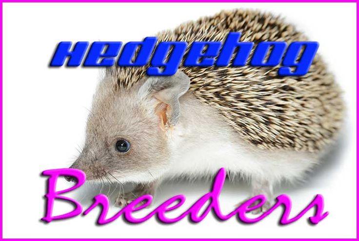 Hedgehog Breeders