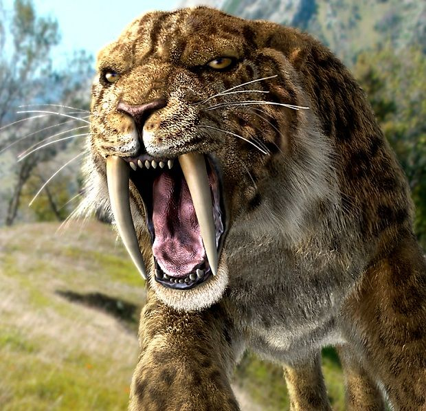 Smilodon ... One of the best known cats with saber tooth. Smilodon was living in the North America and they were specialists for hunting bison and camels. They extinct 10.000 years ago.