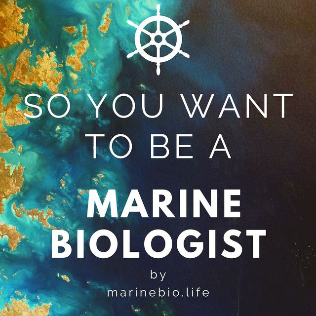 Listen To So You Want To Be A Marine Biologist On Spotify So You Want To Be A Marine Biologist Is Your Go Marine Biology Jobs Marine Biologist Marine Biology