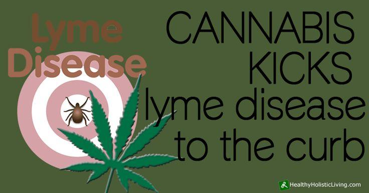 Cannabis Kicks Lyme Disease to the Curb - Healthy Holistic Living