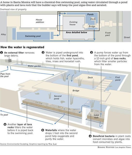 How the natural swimming pool filtration system works. Chemical-free, maintenance-free (other than weeding I guess).