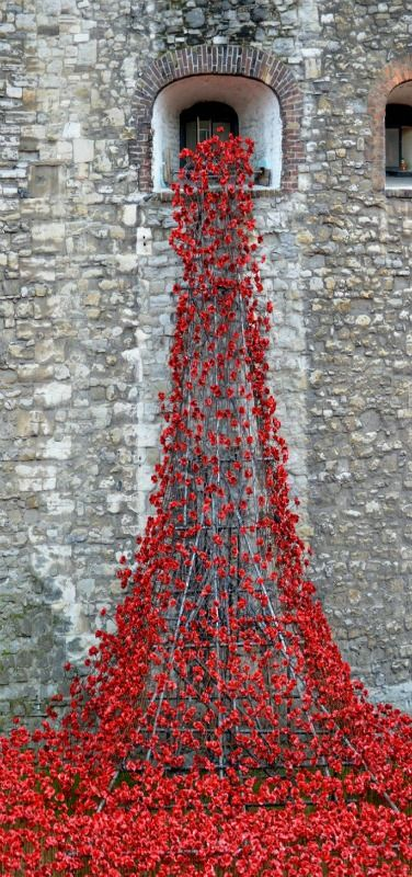 Tower of London on Armistice Day | 'Blood Swept Lands and Seas of Red' installation of 888,246 red ceramic poppies to commemorate the centenary of World War 1. The final poppy was planted on Armistice Day. The Weeping Window, England | by Elaine Williams #london www.littlemissscrabbled.co.uk