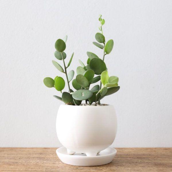 14017 Best Rare Plants Images On Pinterest Rare Plants